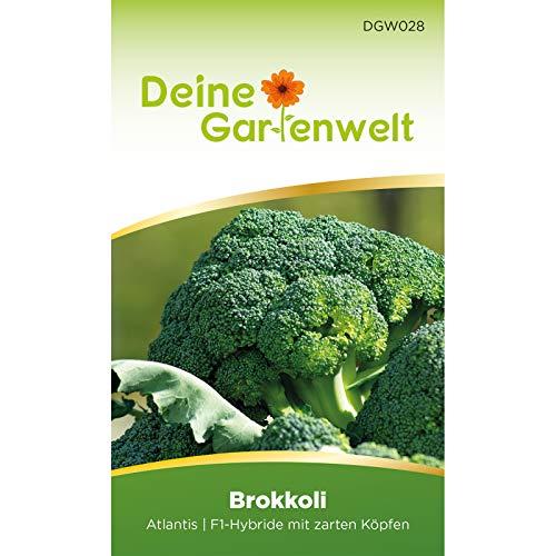 Brokkoli Atlantis F1 | Brokkolisamen | Samen für Kohl | Kohlsamen | Saatgut