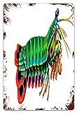 MIFSOIAVV Vendimia Cartel de Chapa metálica Crustáceos Mantis pavo real Camarones Acuario de arrecife Estomatópodos de agua salada Odontodactylus Placa Póster,Pared de Hierro Retro 20x30cm
