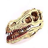 VOANZO Réplica de modelo de calavera Velociraptor de resina, con diente de dinosaurio, fósil, herramienta de enseñanza para el hogar