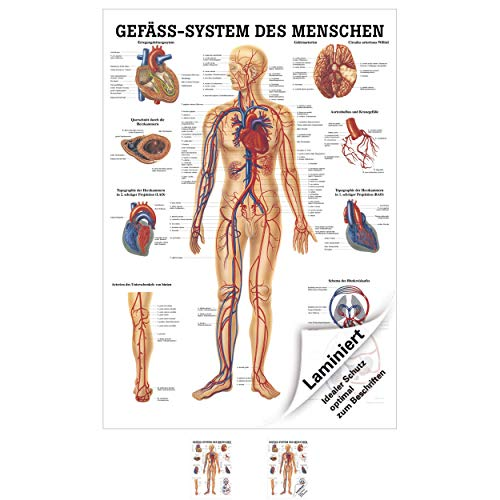 Das Gefäßsystem Lehrtafel Anatomie 100x70 cm medizinische Lehrmittel