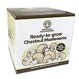 Merryhill Mushrooms - Grow Your Own Fresh Chestnut Lidded Gift Mushroom Kit (Single Chestnut Mushroom Kit)