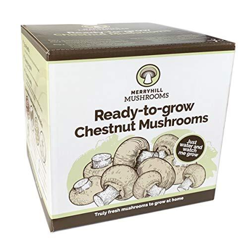 Merryhill Mushrooms - Grow Your Own Fresh Chestnut Mushroom Growing Kit (Single Chestnut Mushroom...