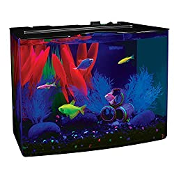 Best 5 Gallon Fish tank with heater and filter