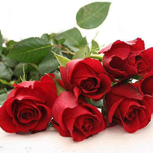 XINDUO Fleurs Sauvages en mélange Graines,Jardin Fleur ornementale Plante en Pot Rose espèces-30 Capsules_Mélange de Couleur,Graines De Printemps Vivaces