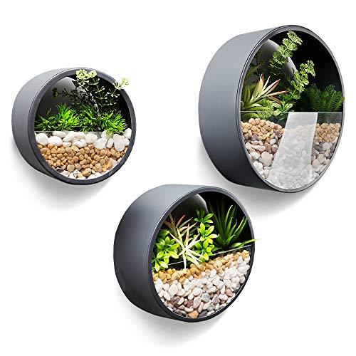 JonesHouseDeco Set di 3 Vasi da Parete per Piante Grasse Terrario in Vetro Trasparent e Contenitore in Metallo Decorazione del Soggiorno Spessore 10 cm (Grigio Scuro)