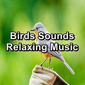 Birds Sounds Relaxing Music