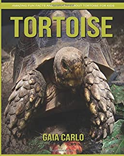 Best painting of tortoise Reviews