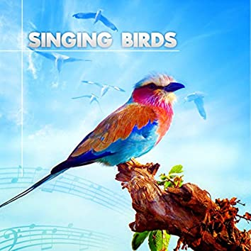 Singing Birds – Amazing Sound Effects of Birds, Forest Ambience, Morning Bird Calls for Relaxation
