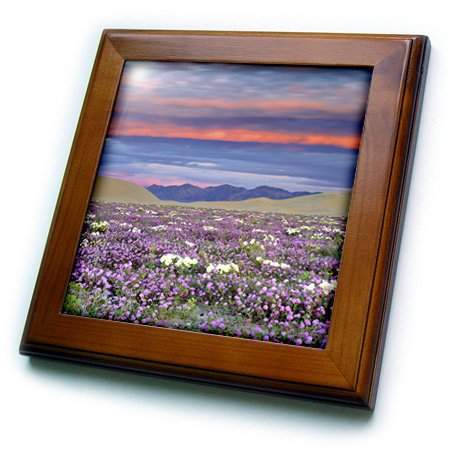 3dRose ft_88161_1 California, Dumont Dunes. Desert Sand Eisenkraut - US05 BJA0034 - Jaynes Gallery - Gerahmte Fliese, 20,3 x 20,3 cm
