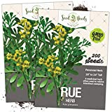 Seed Needs, Rue Herb (Ruta graveolens) Twin Pack of 200 Seeds Each Non-GMO