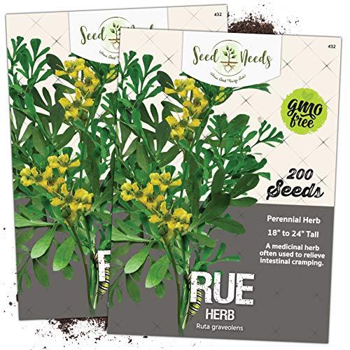 Seed Needs, Rue Herb (Ruta graveolens) Twin Pack of 200 Seeds Each...