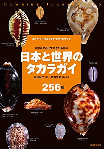 日本と世界のタカラガイ: 自然が生み出す驚きの造形美