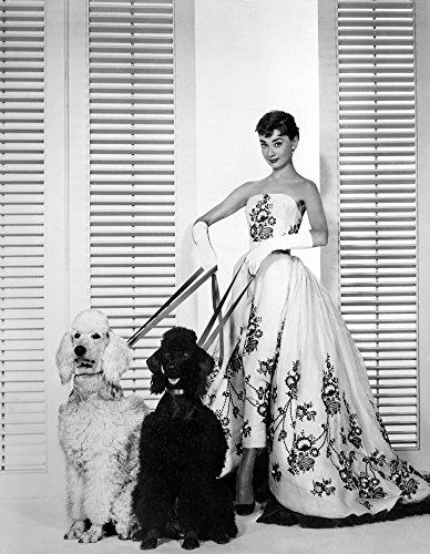 Audrey Hepburn Walking Dogs Sabrina Photo Print (8 x 10)