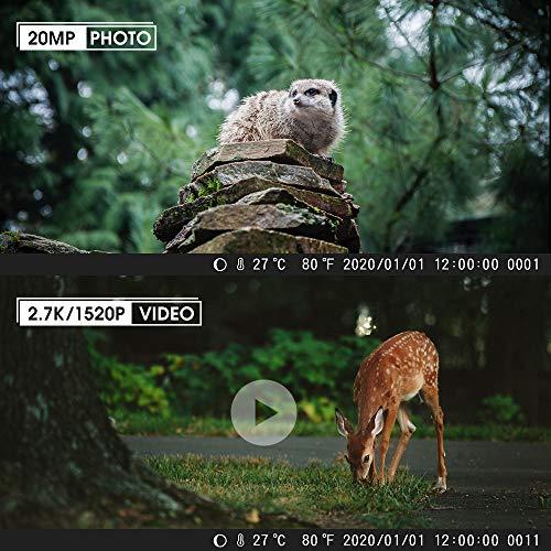 COOLIFE H953 20MP Wildkamera mit 32GB SD-Karte Erfahrungen & Preisvergleich