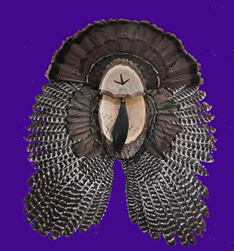 Turkey Fan Plaque / Turkey Mounting Kit / Turkey Hunting Turkey Fan and Beard Mount / Turkey Fan Mount And Display Kit / One Of A Kind Turkey Fan Mount Turkey Fan And Wing Mount
