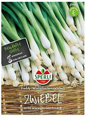 83682 Sperli Premium Lauchzwiebel Samen Freddy | Mild | Würzig | Aromatisch | Lauchzwiebel Saatgut | Lauch Samen
