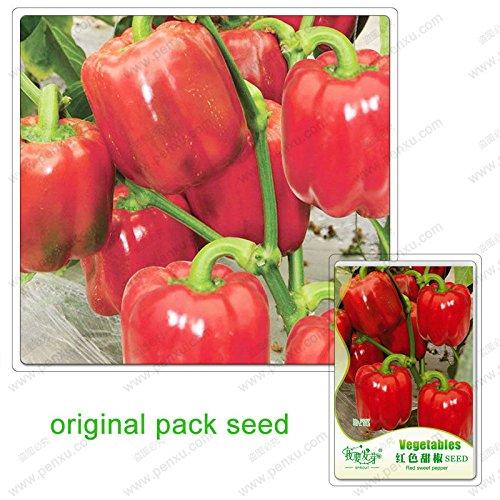 10 graines/Paquet rouge Poivron Chili balcon Paprika Pot Capsicum annuum Graines