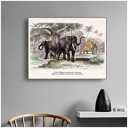 Vintage elefante estampado elefante indio animal naturaleza historia obra de arte cartel retro pared arte pintura imagen decoración del hogar-60x90 cm x1 sin marco