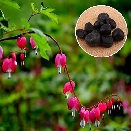 Auntwhale (10 Pcs) Purse Pivoine Graine Rose