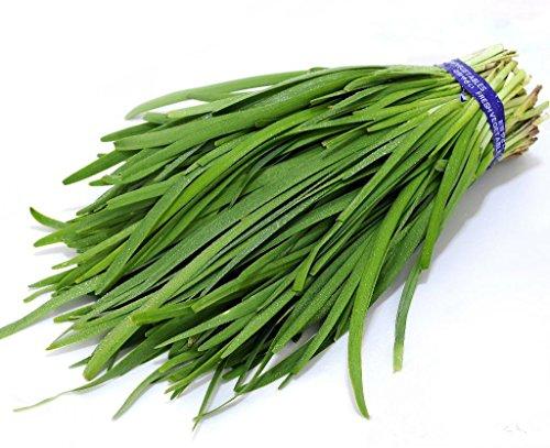 Futaba Ail Ciboulette chinois Ciboulette pur légumes biologiques Natural Green 300 graines