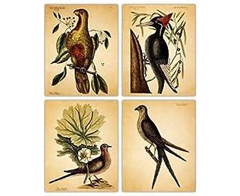 Best vintage bird pictures Reviews
