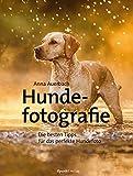 Hundefotografie: Die besten Tipps für das perfekte Hundefoto