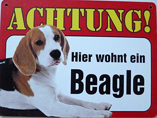 Schild 14x19cm - Hier wohnt ein Beagle Hund Haus Alu Coupon dipond