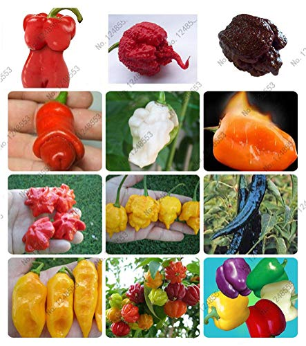 24 Kinds 100 Vegetable Fruit Pepper Seeds, Giant Chili Seeds + Sweet Pepper + Carolina Reaper' + hot Chilli Bonsai Plant Potted