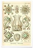 JUNIQE® Vintage Quallen Poster 20x30cm - Design
