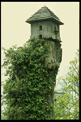 Metal Sign English Country Gardens Uk Gb 131038 Dove Cote On Old Dead Tree A4 12x8 Aluminium