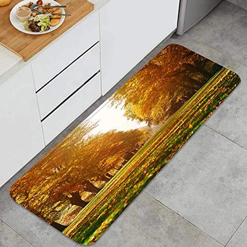 Throwpillow Cocina Antideslizante Alfombras de pie Larga Avenida arbolada Color otoñal Decoración de Piso Confortables para el hogar, Fregadero, lavandería-120cm x 45cm