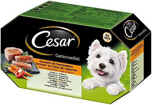 Cesar hondenvoer, natte voering, diverse soorten tuinen met groentekern, 24 schalen (6 x 4 x 150 g)