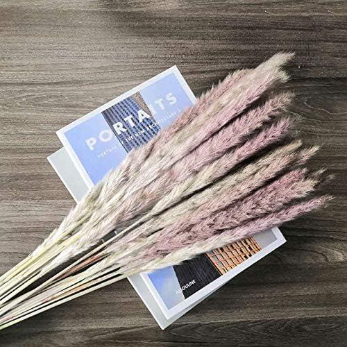 20 Pcs Natural Dried Pampas Grass Communis Plant Reed Max Max 59% OFF 70% OFF Phragmites