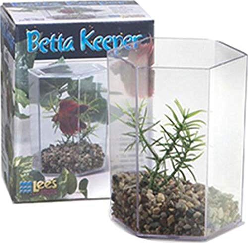 Lee's Betta Keeper avec Couvercle, Gravier et Plante Taille S