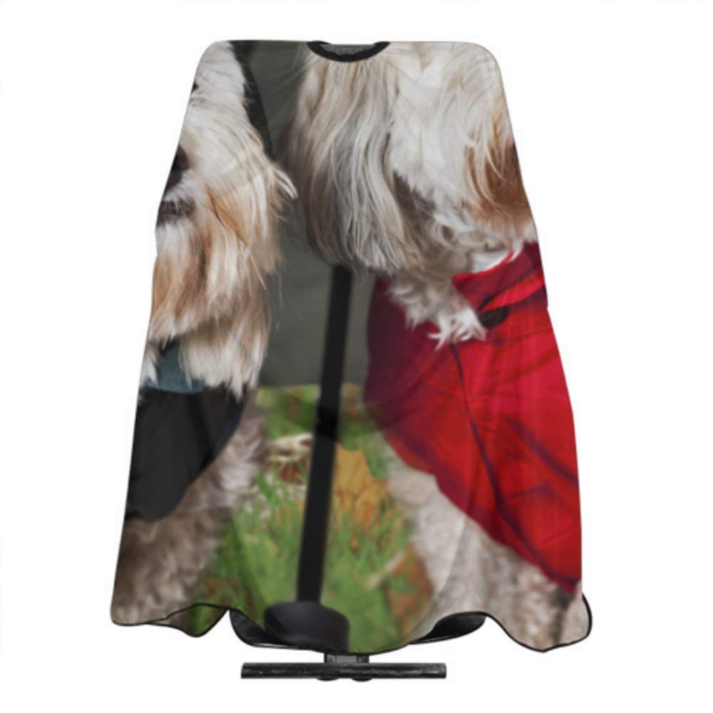 Amazon.com : Two Coton De Tulear Dogs Raincoats Barber Cape