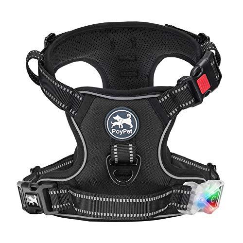 Best LED Dog Vests