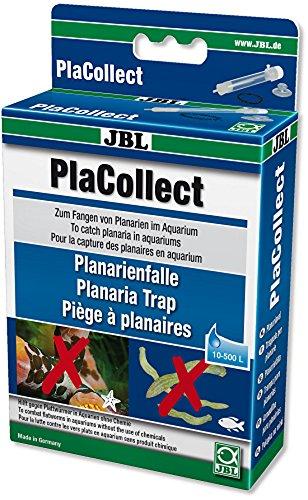 PlaCollect Planarienfalle gegen Plattwürmer im Süß,-und im Meerwasser