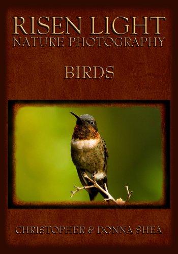 Risen Light Nature Photography of Birds (English Edition)