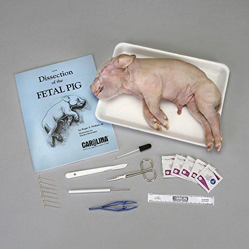 Carolina Pig Anatomy Kit with Dissecting Set