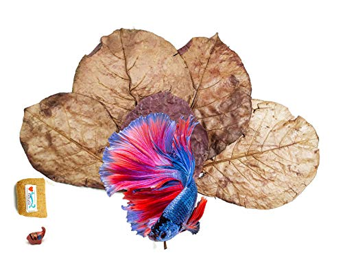 FANCYTE 18-25CM 50 Grams(25PIECES) Indian Almond Leaves Fish Tank for Shrimp Crayfish, Betta...