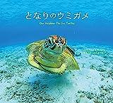 となりのウミガメ Our Neighbor The Sea Turtles (うみまーる写真集)