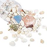 PandaHall Cerca de 500 g mezclado natural conchas de mar sin agujero océano playa Shell encantos con cuentas de chip de vidrio de mar para manualidades, joyería, jarrón de relleno decoración de verano