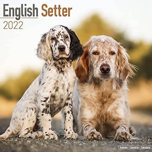 English Setter Calendar 2021 - Dog Breed Calendar - Wall Calendar 2020-2021