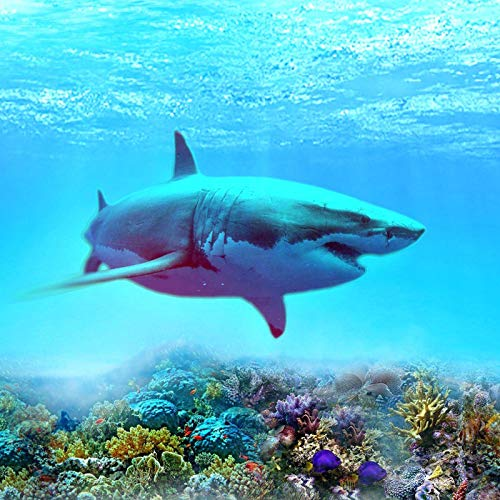 1000 piece shark puzzle - 5