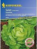 Salat Kopfsalat Dynamite resistent