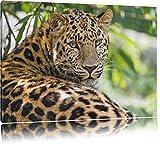 aufmerksamer Leopard im Schatten auf Leinwand, XXL riesige