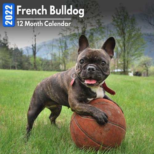 Calendar 2022 French Bulldog: Cute French Bulldogs Photos Mini Calendar a Monthly Square Book Planner With Inspirational Quotes each Month