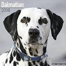 Dalmatian Calendar - Dog Breed Calendars - 2017 - 2018 wall Calendars - 16 Month by Avonside