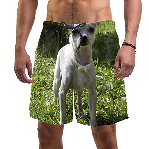 LXYDD Pantalones Cortos de Playa para Hombre Traje de baño de Surf M,Perro Chihuahua