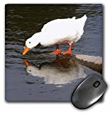 3dRose mp_11533_1 8 x 8-Inch Mirror Mirror, White Duck Mouse Pad